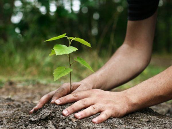 वृक्ष लागवडीतून झाडांनाही श्वास देऊ यात !